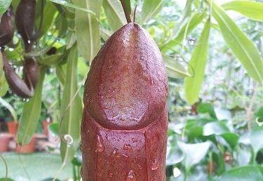 iritatie penis