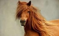 Samponul pentru cai face furori printre femei. Se vinde cum apare pe raft!