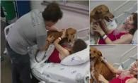 O mama bolnava de cancer in faza terminala a vrut sa-si revada cainele! Incredibil ce s-a intamplat cand l-a strans in brate - VIDEO
