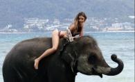 Sedinta pasionala alaturi de un elefant! Vezi modelul care l-a provocat pe animalut - FOTO