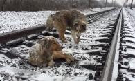 Era prea ranit sa se mute din fata trenului, asa ca prietenul i-a venit in ajutor. Catelul care a emotionat cu gestul lui - VIDEO