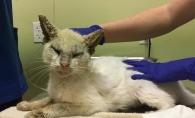 A gasit o pisica bolnava pe strada si a vrut sa o salveze. Surpriza de care a avut parte cand felina a deschis ochii - FOTO