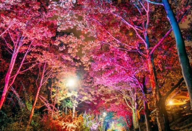 O alee colorata, ca din povesti! Un adevarat spectacol a avut loc in parcul Valea Trandafirilor - VIDEO