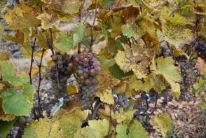 Care este legatura dintre podgoriile Cricova si Viorica-Cosmetics - FOTO