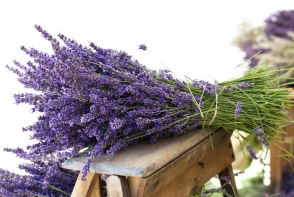 Fii sanatoasa in aceasta iarna. Iata lista plantelor si condimentelor care iti vor ridica imunitatea - FOTO