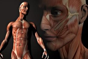 Parti ale corpului uman care o sa dispara in viitor. Esti curios cum o sa traiesti fara ele?