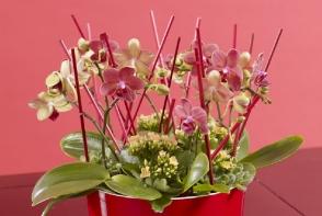 Ce faci cu tija de la orhidee dupa ce au cazut toate florile: o tai sau o pastrezi? Afla care sunt avantajele si dezavantajele - FOTO