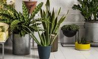 Cum sa scapi de tantari cu ajutorul plantelor! Incepe caldura si se deschide sezonul de vanatoare a insectelor - FOTO