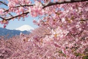 Farewell spring, hello summer! Cherry Blossom Party - o petrecere racoritoare, marca perfecte.md, pentru acest final de primavara