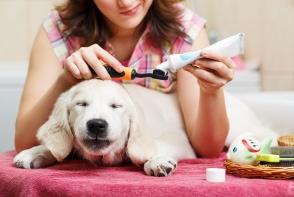 Rasfat pentru patrupezi! Vezi de ce proceduri de frumusete se pot bucura animalele la salon - VIDEO