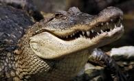 Pe cat este de neobisnuit, pe atat este si de infricosator! Are in jur de 40 de ani si este unicul crocodil de la Gradina Zoologica din Chisinau - VIDEO