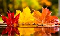 Horoscopul saptamanii 5-11 noiembrie 2018: Perioada buna pentru Pesti si Capricorni